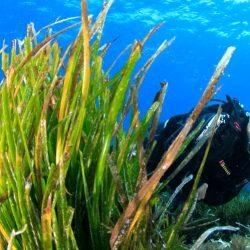 Mostra fotografica Meraviglie sotto il mare